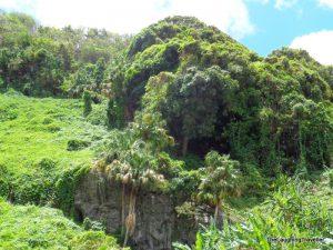 האי ראוניון