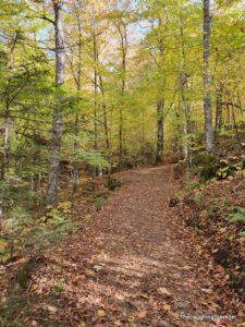 שביל הליכה בין עצי שלכת