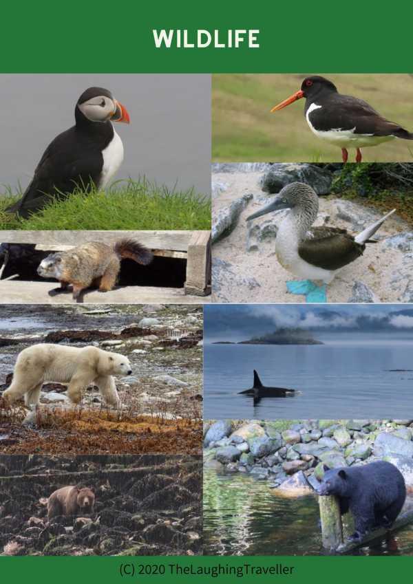 צילום חיות בר